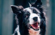 Une nouvelle loi Californienne demande aux animaleries de ne vendre que des animaux sauvés !