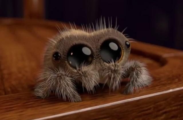 Cette araignée bien trop chou, la solution pour les arachnophobes?