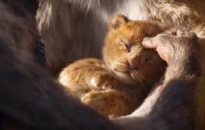 Le Roi Lion a sa bande-annonce et IL EST SI FLUFFY ET DODU OH LÀ LÀ
