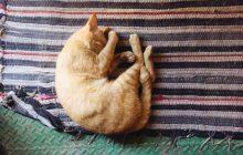 Insomnies : pour bien dormir, il suffit de jouir !