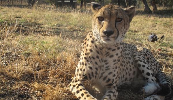 Gratuit rencontres chat Afrique du Sud