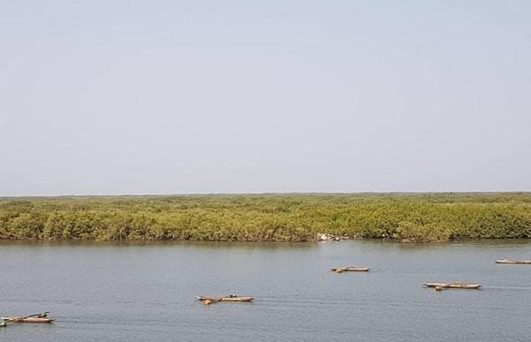 Fleuve Casamance