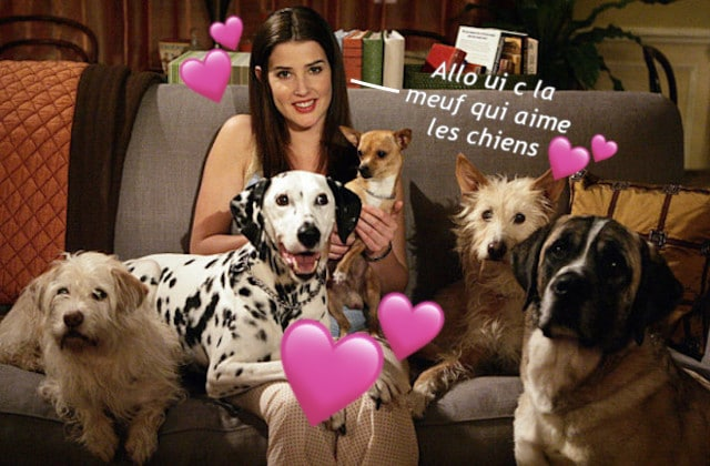 Amour des chiens ma passion pour les chiens t moignage for Amour de cuisine basboussa