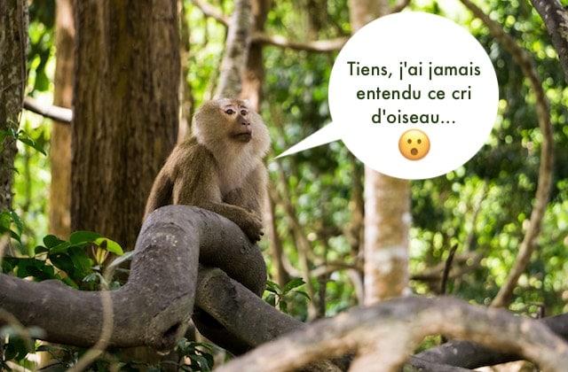 Josée l'Obsédée s'envoie en l'air en pleine forêt d'Amazonie