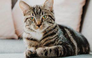 Est-ce que vous manquez à votre chat quand vous n'êtes pas là?