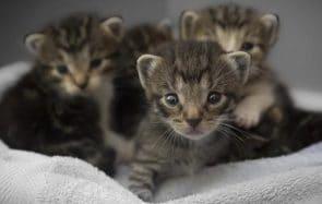 Des chatons inconnus sous le lit, une bonne façon de devenir père