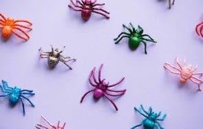Pourquoi vous ne devriez pas tuer les araignées qui vivent chez vous