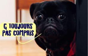 Transforme-toi en prestidigitatrice pour chien avec le #WhatTheFluffChallenge