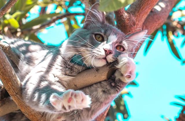 Comment aider ton chat ou ton chien à supporter la canicule