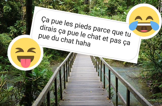 Le Best of des commentaires #61 — Safari dans la jungle de l'Internet