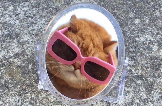 5 comptes Instagram de chats influenceurs à suivre