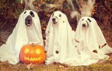 8 idées de costumes pour Halloween, parce que c'est BIENTÔT !