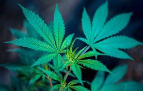 Pourquoi utiliser des cosmétiques au cannabis?