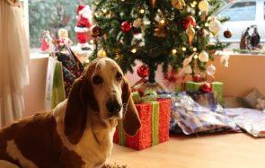 Pourquoi je n'aime pas Noël (et croyez-moi, socialement c'est dur)