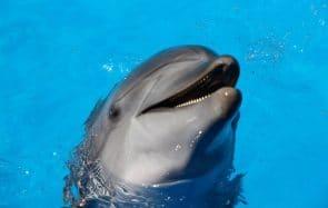 SCANDALE ! Le clitoris des dauphins est mieux placé que le tien!