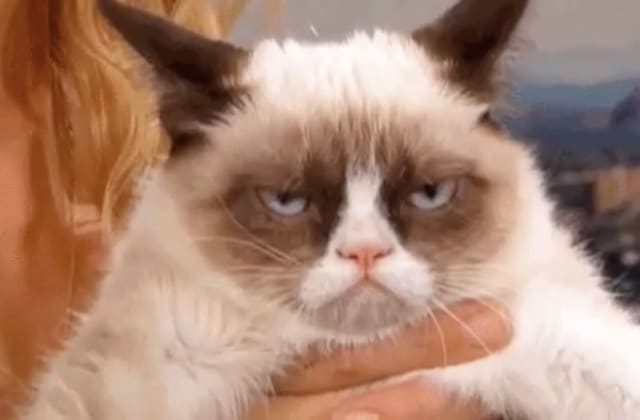 Grumpy Cat nous a quittées:adieu, star des chats grincheux !