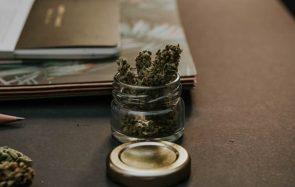 Une instance préconise la légalisation du cannabis en France