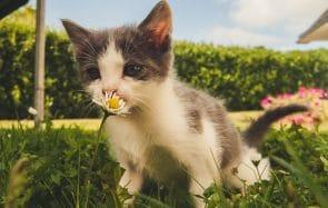La Journée internationale du chat… en gifs!