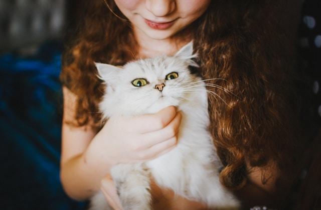 Les chats aiment leur maître, c'est prouvé