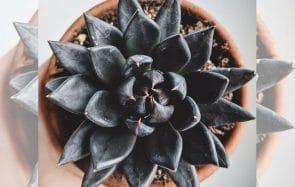 Des plantes noires et piquantes pour une déco d'automne au top du dark
