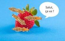 Oui, il y a des insectes dans les fraises que tu consommes…