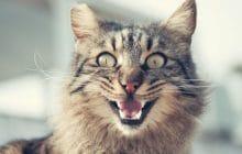 Pourquoi les chats courent-ils après avoir fait caca ?