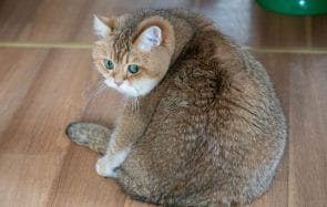 3 comptes de chats adorables et ronds à suivre pour s'attendrir