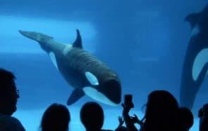 Quel avenir pour les animaux sauvages en captivité ?