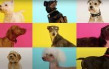 Meilleure nouvelle : il existe désormais une chanson de Noël pour les chiens