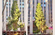 Le tragique sapin de Noël du Rockefeller Center est celui que 2020 mérite